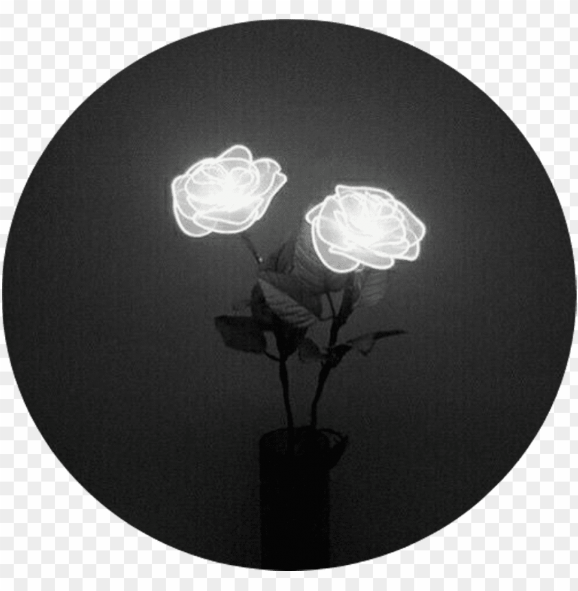 free PNG tumblr aesthetic black roses rose - white rose tumblr aesthetic PNG image with transparent background PNG images transparent