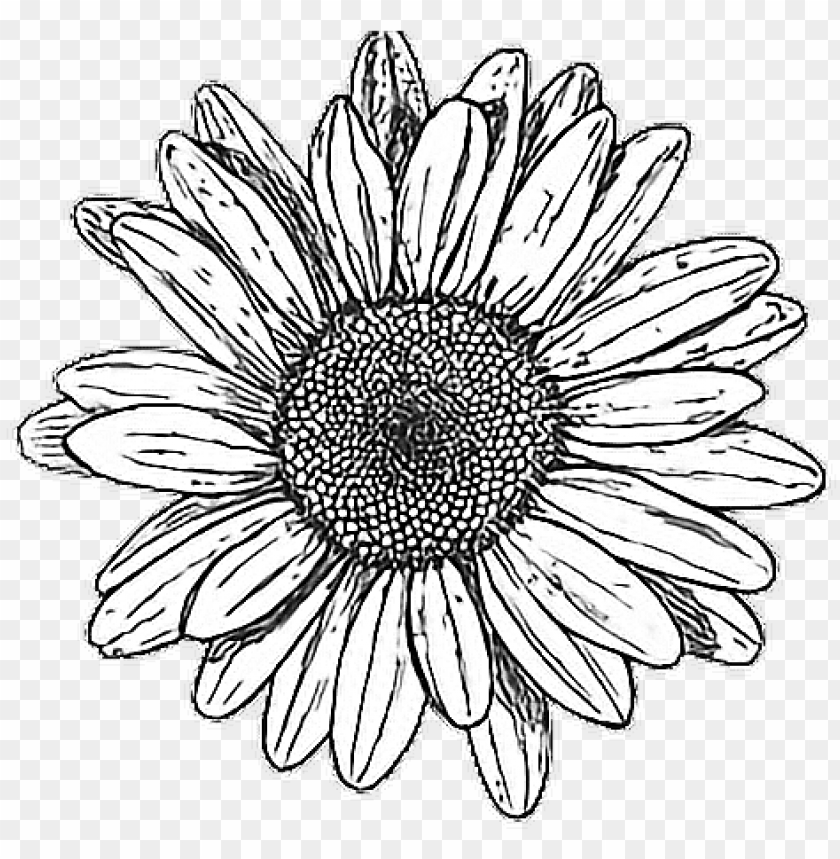 Tumblr Drawing Hipstergirl Myedit Black And White Flower Png Image With Transparent Background Toppng