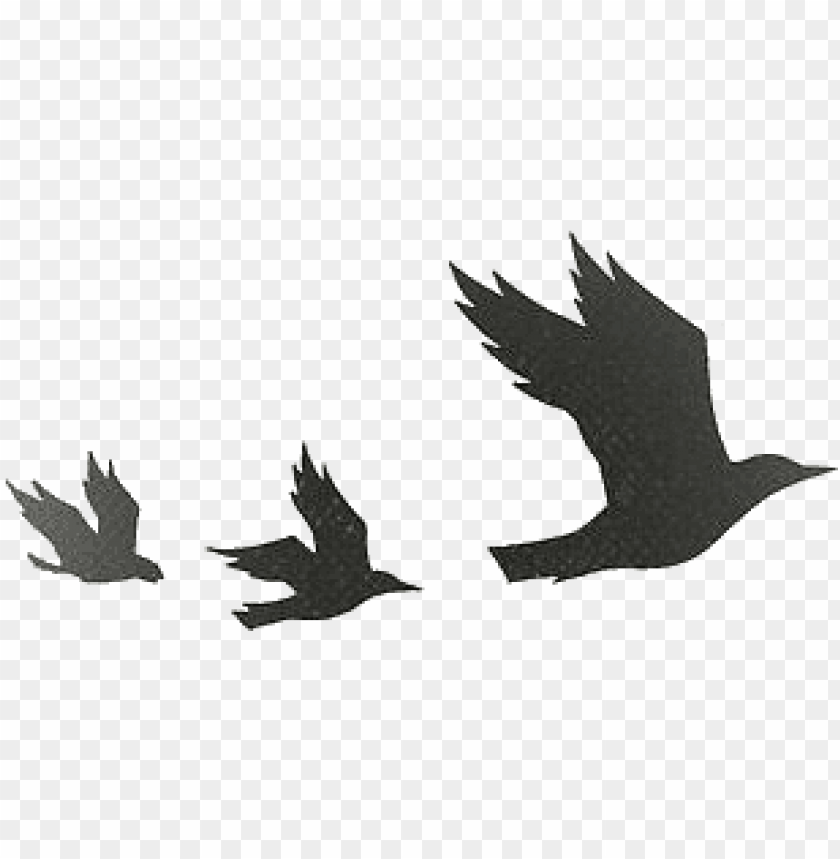 free PNG tumblr static tumblr static tumblr static transparent4 - divergent birds PNG image with transparent background PNG images transparent