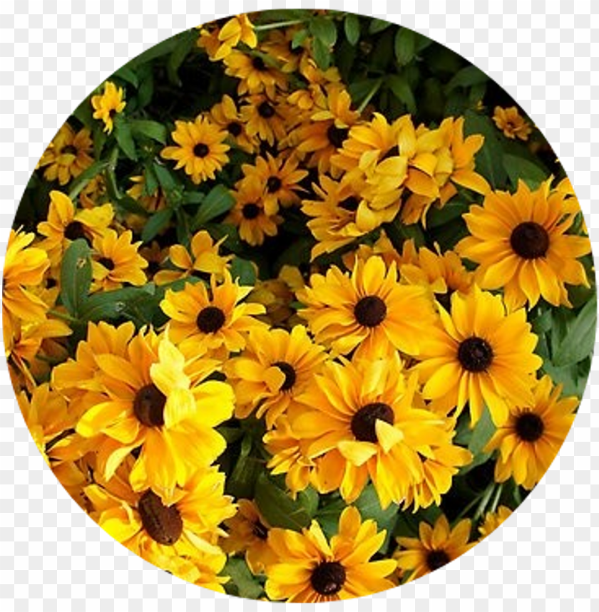 tumblr sticker yellow flower aesthetic png image with transparent background toppng yellow flower aesthetic png image with