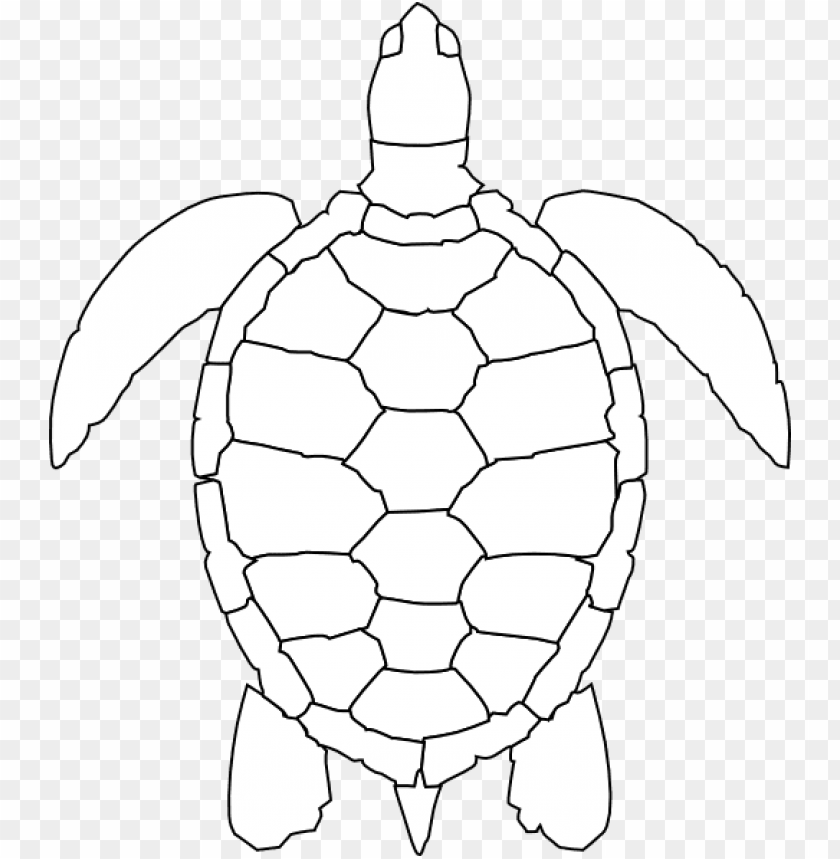 Turtle Shell Pattern Drawi Png Image With Transparent Background