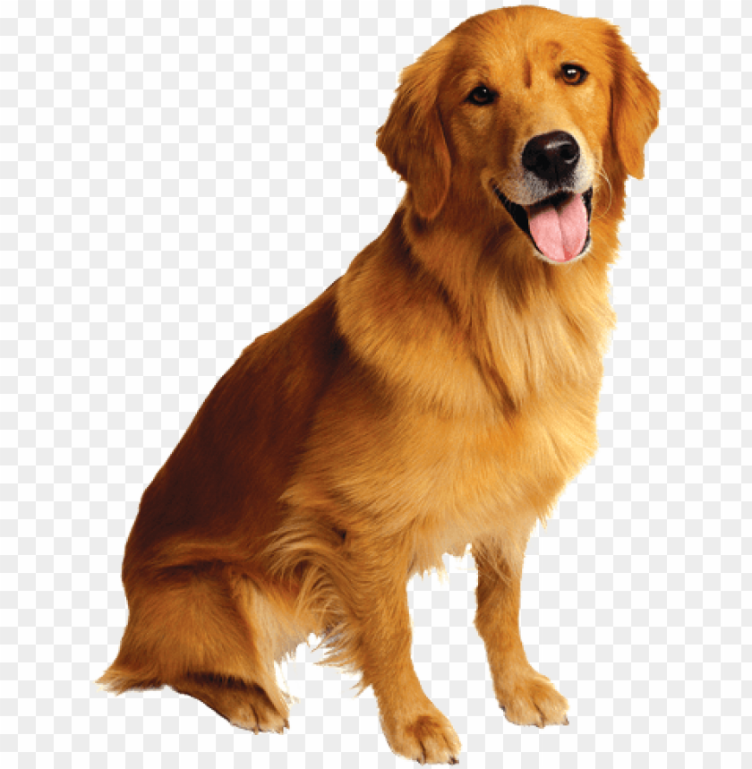 free PNG uncle milton pet's eye view camera cameras PNG image with transparent background PNG images transparent