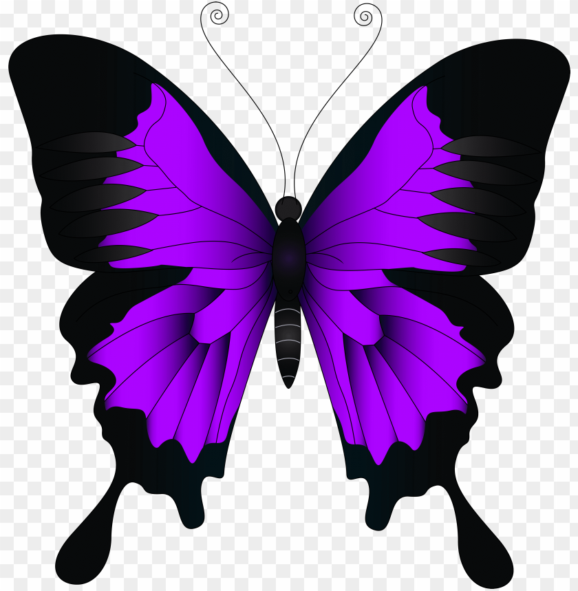 free PNG urple butterfly png - pink and purple butterfly PNG image with transparent background PNG images transparent