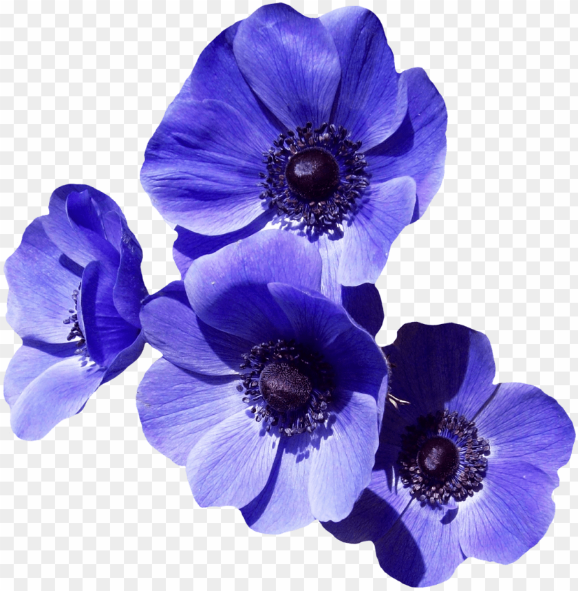 free PNG urple flower png image - purple flowers transparent background PNG image with transparent background PNG images transparent