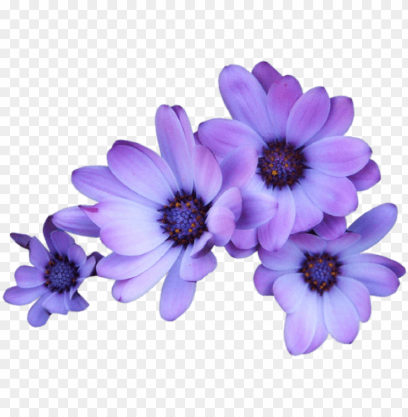 free PNG urple flowers transparent background PNG image with transparent background PNG images transparent