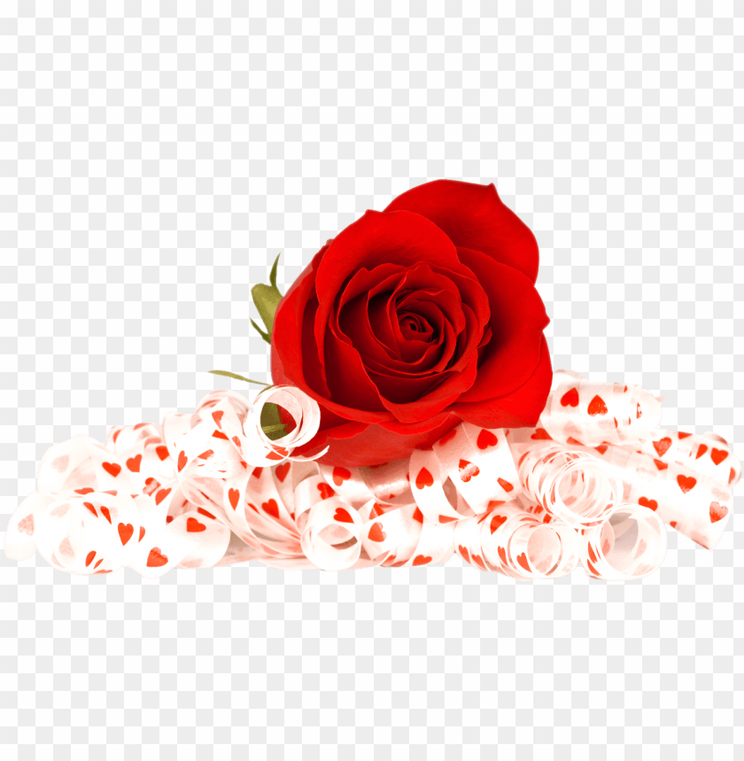 free PNG valentines day roses png photo - flowers red rose PNG image with transparent background PNG images transparent