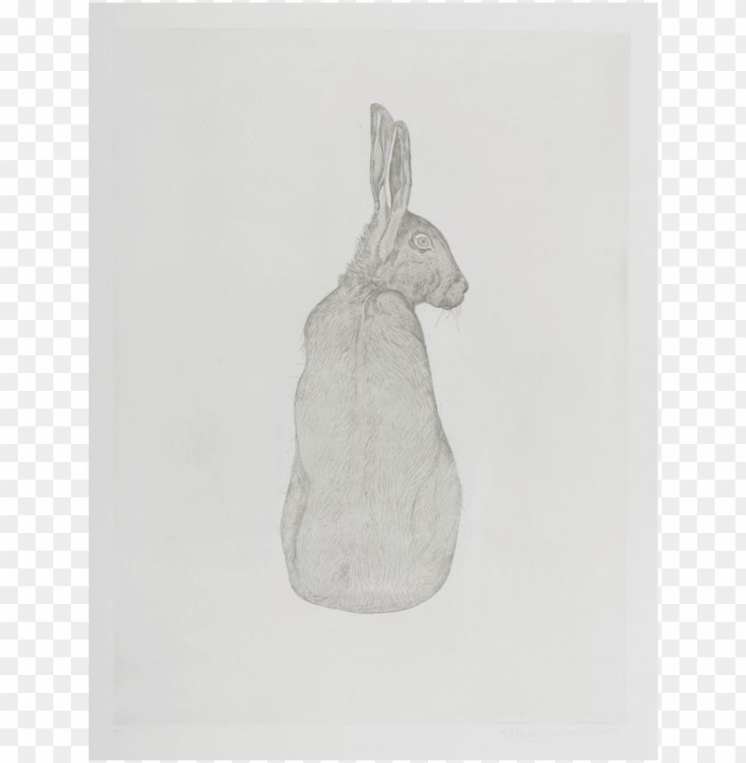 free PNG valerie-hammond hare - sketch PNG image with transparent background PNG images transparent