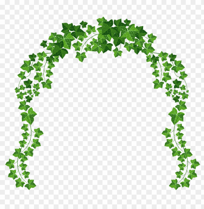 free PNG Download vine archpicture clipart png photo   PNG images transparent