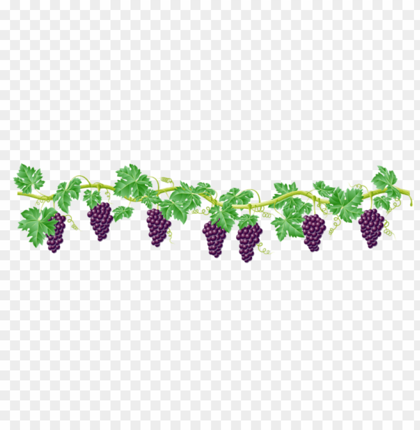 free PNG Download vine decorative elementpicture clipart png photo   PNG images transparent