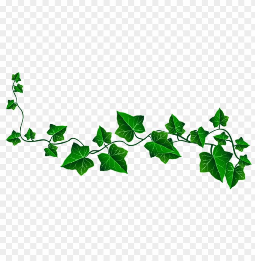 free PNG Download vine ivy decorationpicture clipart png photo   PNG images transparent