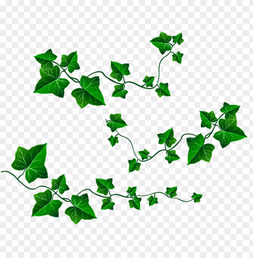 free PNG Download vine leaves decorationpicture clipart png photo   PNG images transparent