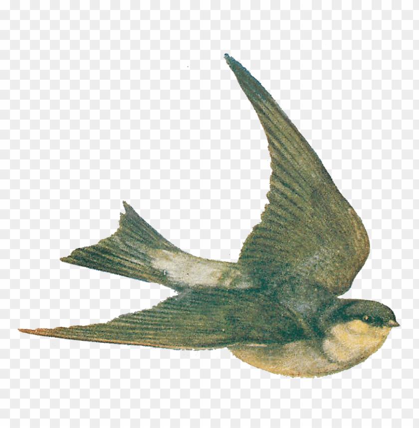 free PNG Download vintage bird illustration png images background PNG images transparent