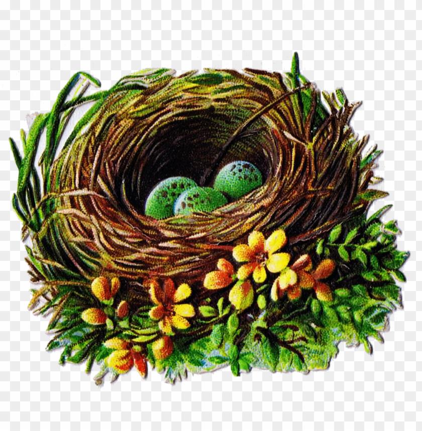 free PNG vintage birds nest PNG image with transparent background PNG images transparent