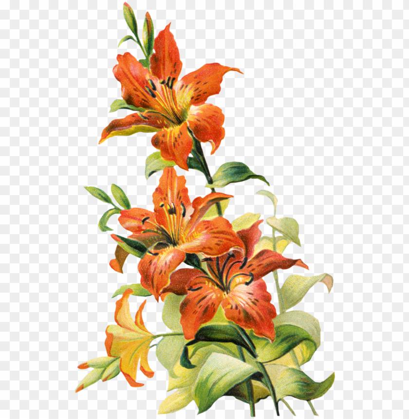 free PNG vintage lily flower PNG image with transparent background PNG images transparent