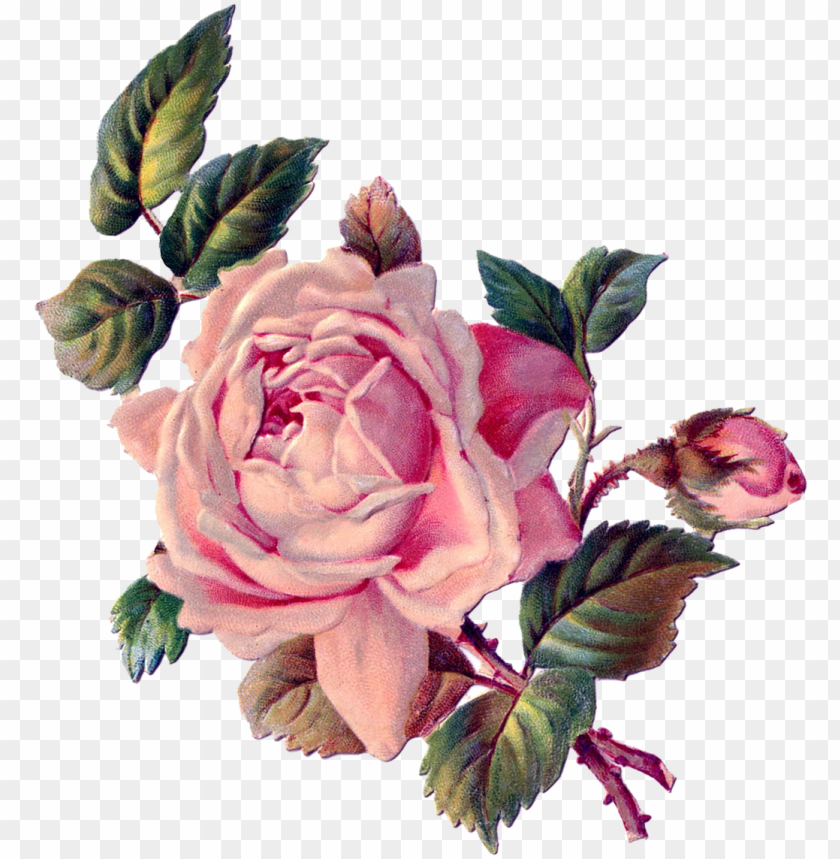 free PNG vintage roses, vintage floral, rose art, vintage images, - rose decoupage PNG image with transparent background PNG images transparent
