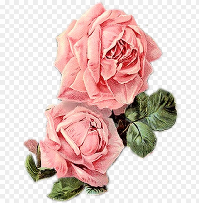 free PNG vintage roses, vintage floral, vintage prints, vintage - vintage pink flowers PNG image with transparent background PNG images transparent