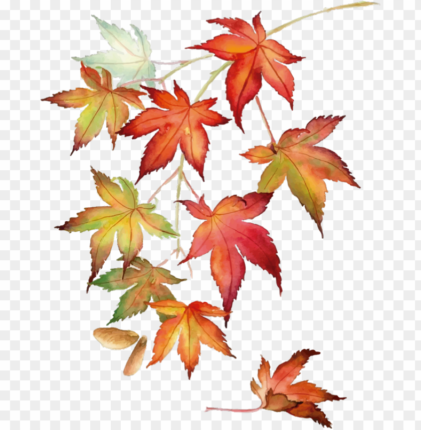 free PNG wall colour - japanese maple watercolor PNG image with transparent background PNG images transparent