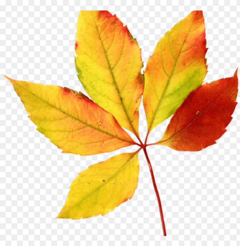 free PNG watercolor autumn leaves PNG image with transparent background PNG images transparent