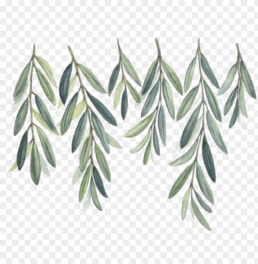 free PNG watercolor olive branch png - free watercolor olive branch PNG image with transparent background PNG images transparent