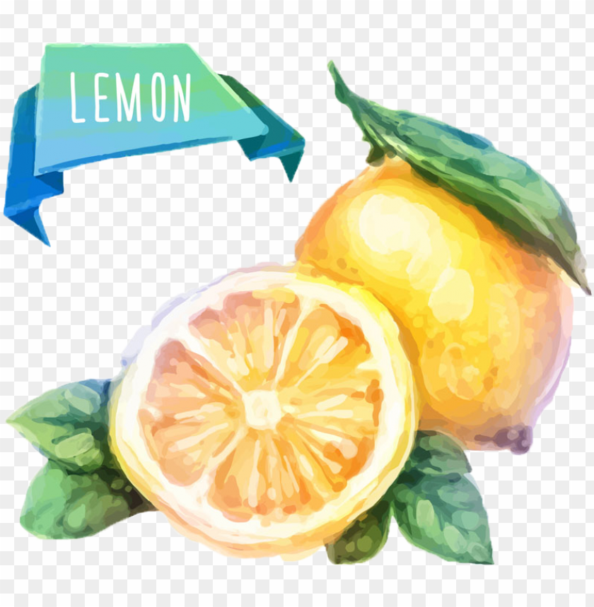 free PNG watercolor painting fruit drawing illustration - watercolor fruits vector PNG image with transparent background PNG images transparent