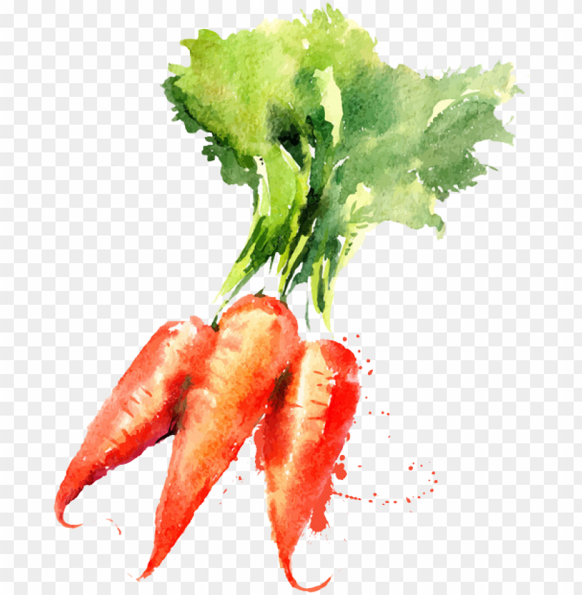 free PNG watercolor painting vegetable drawing carrot - vegetable watercolor paintings PNG image with transparent background PNG images transparent