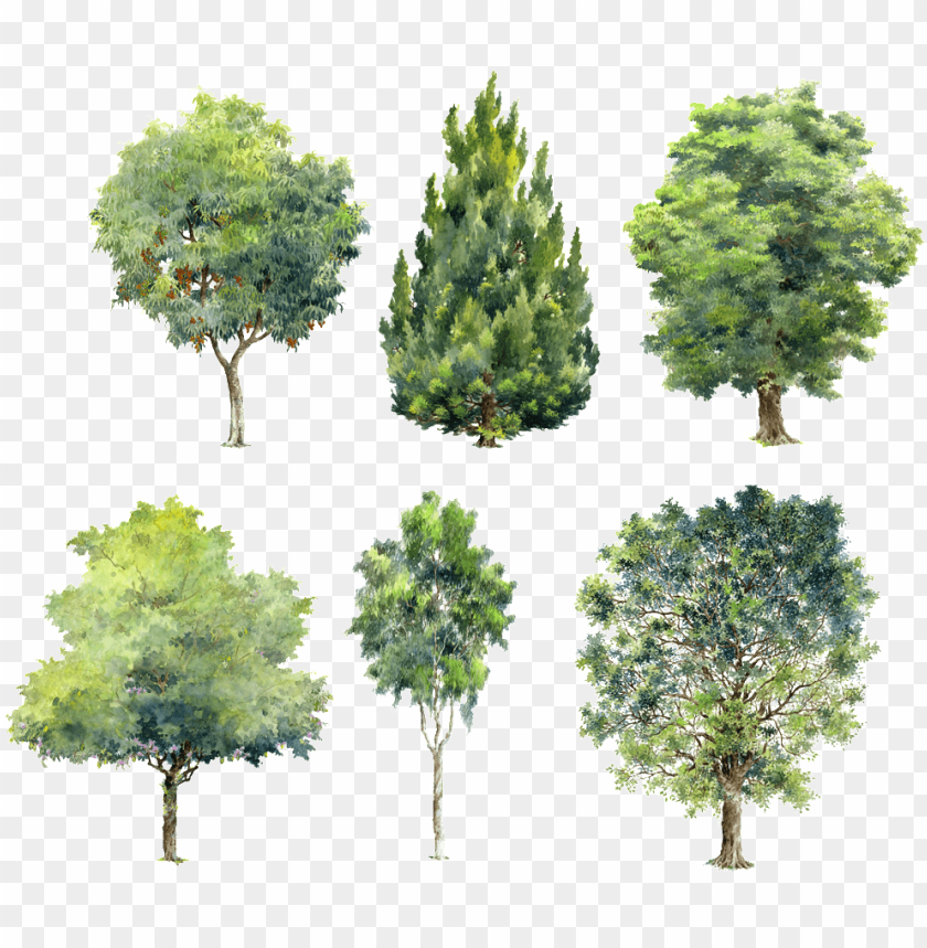 Watercolor Trees For Photoshop Png Image With Transparent Background Toppng