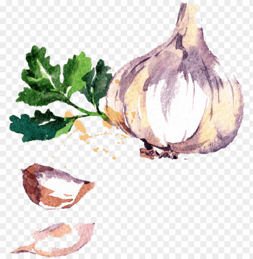 free PNG watercolor vegetables PNG image with transparent background PNG images transparent