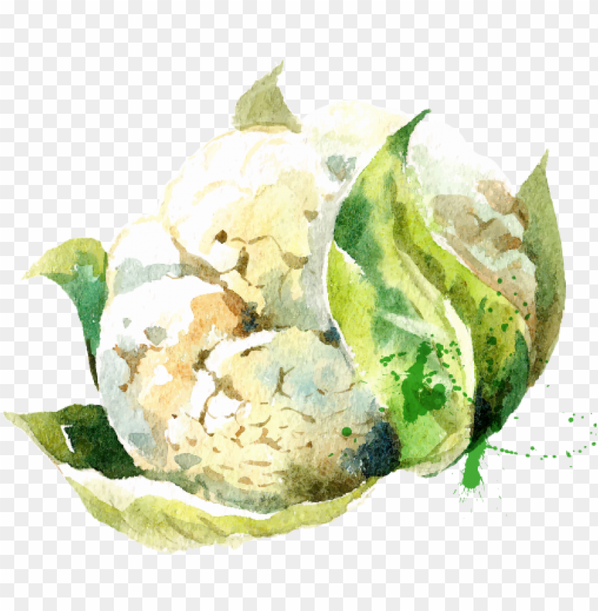 free PNG watercolor vegetables stock vector PNG image with transparent background PNG images transparent