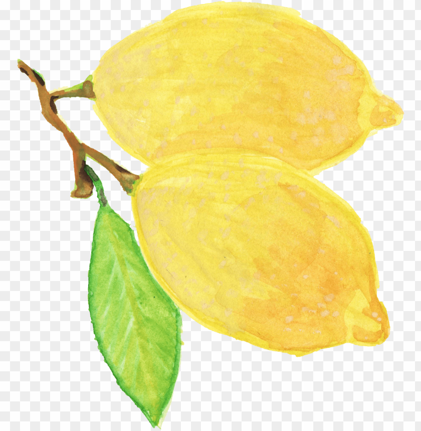watercolor yellow flower png image with transparent background toppng watercolor yellow flower png image with