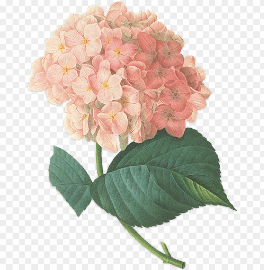 free PNG we have 80 weddings planned for 2015 and have 100 staff - flower transparent vintage PNG image with transparent background PNG images transparent