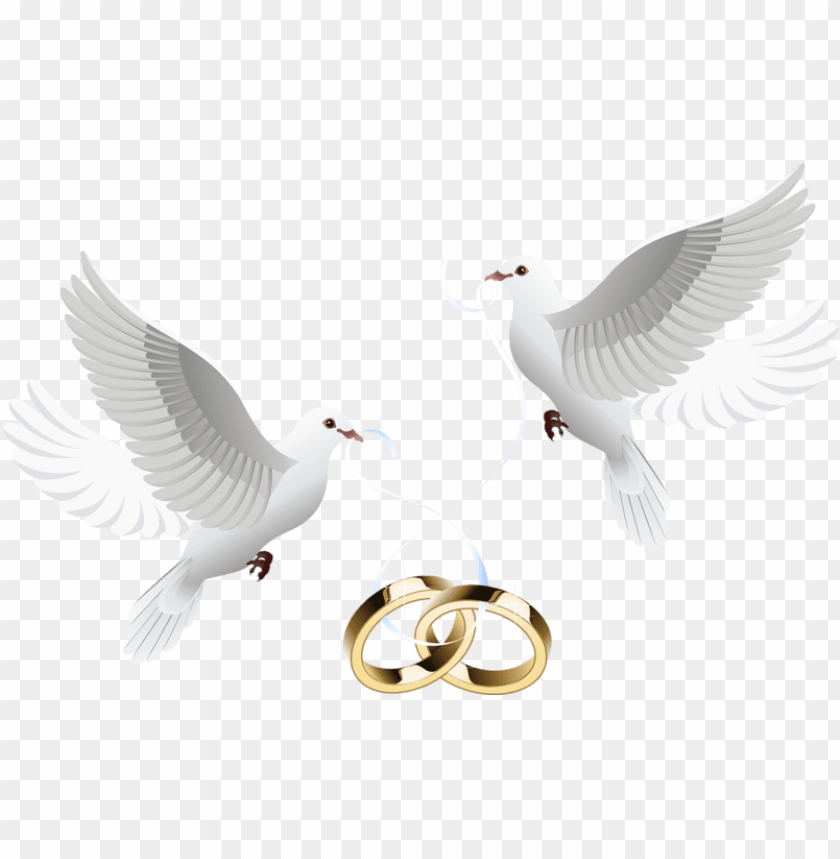 Wedding Dove Png Jpg Royalty Free Download Wedding Invitations