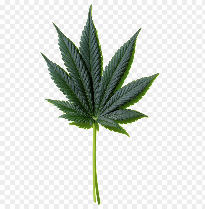 free PNG weed leaf png - silhouette japanese maple leaf PNG image with transparent background PNG images transparent