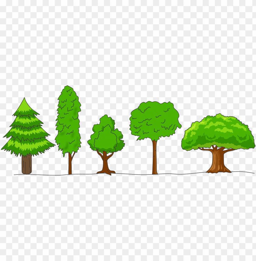free PNG what is meant by crown of a tree draw any four shapes - crown shapes of trees PNG image with transparent background PNG images transparent