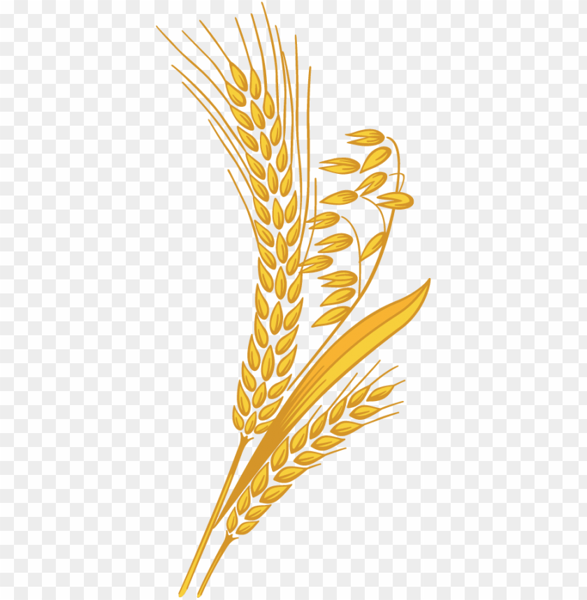 free PNG wheat grain png clipart transparent library - wheat clipart PNG image with transparent background PNG images transparent