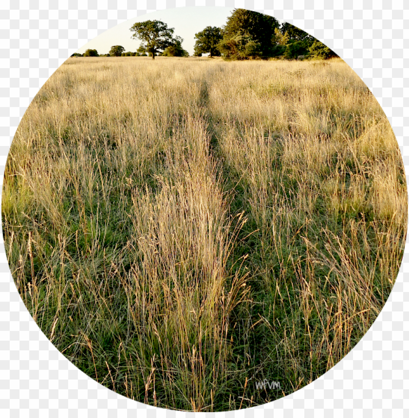 free PNG where a track used by a fox or badger cuts through - grass PNG image with transparent background PNG images transparent