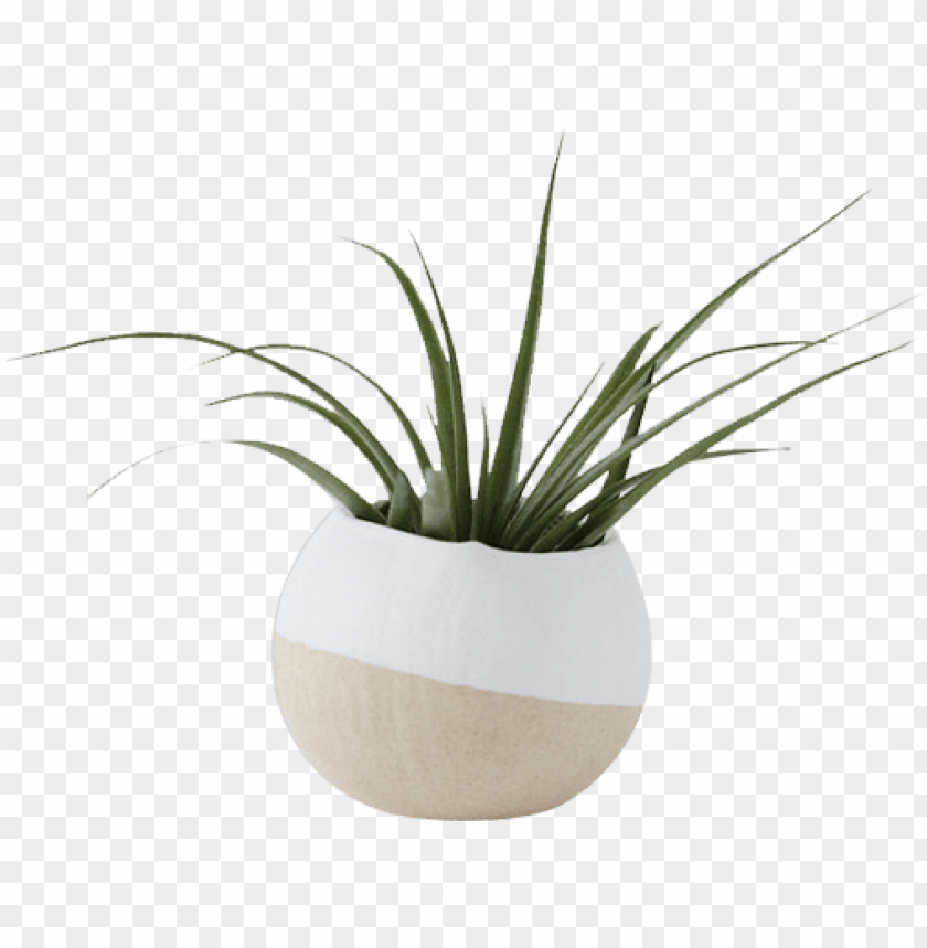 free PNG white air plant pot - white vase plant PNG image with transparent background PNG images transparent
