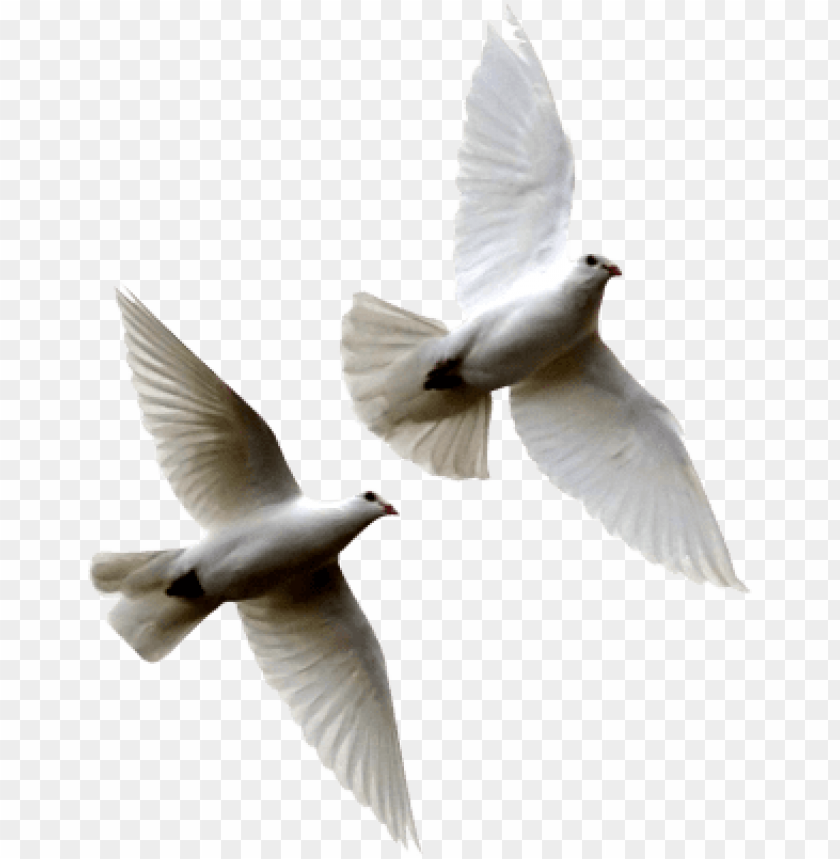 free PNG white birds flying png white - doves flying PNG image with transparent background PNG images transparent