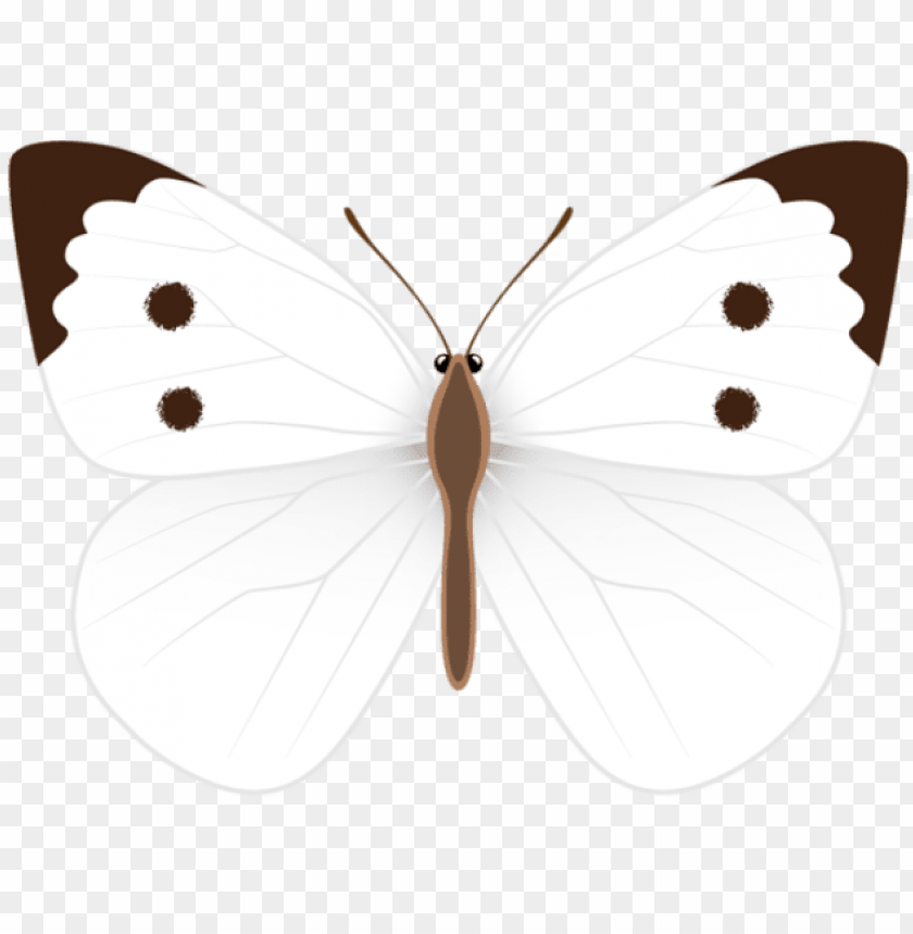 free PNG white butterfly, clipart images, photo ideas, clip - white butterfly clipart PNG image with transparent background PNG images transparent