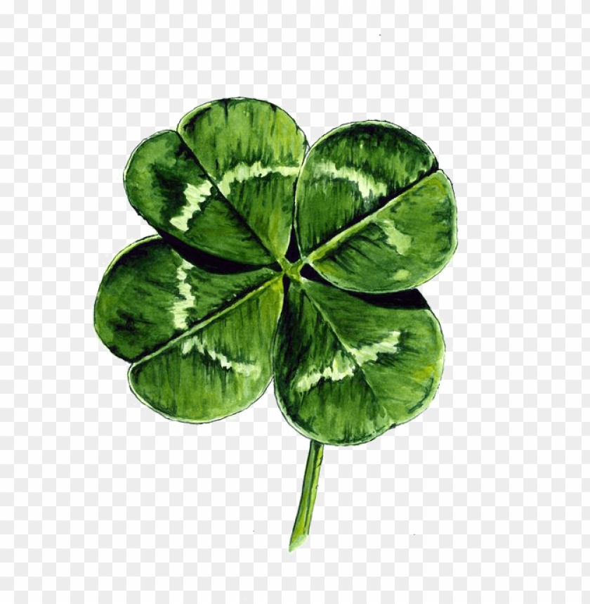 free PNG white clover four-leaf clover watercolor painting drawing - four leaf clover drawi PNG image with transparent background PNG images transparent