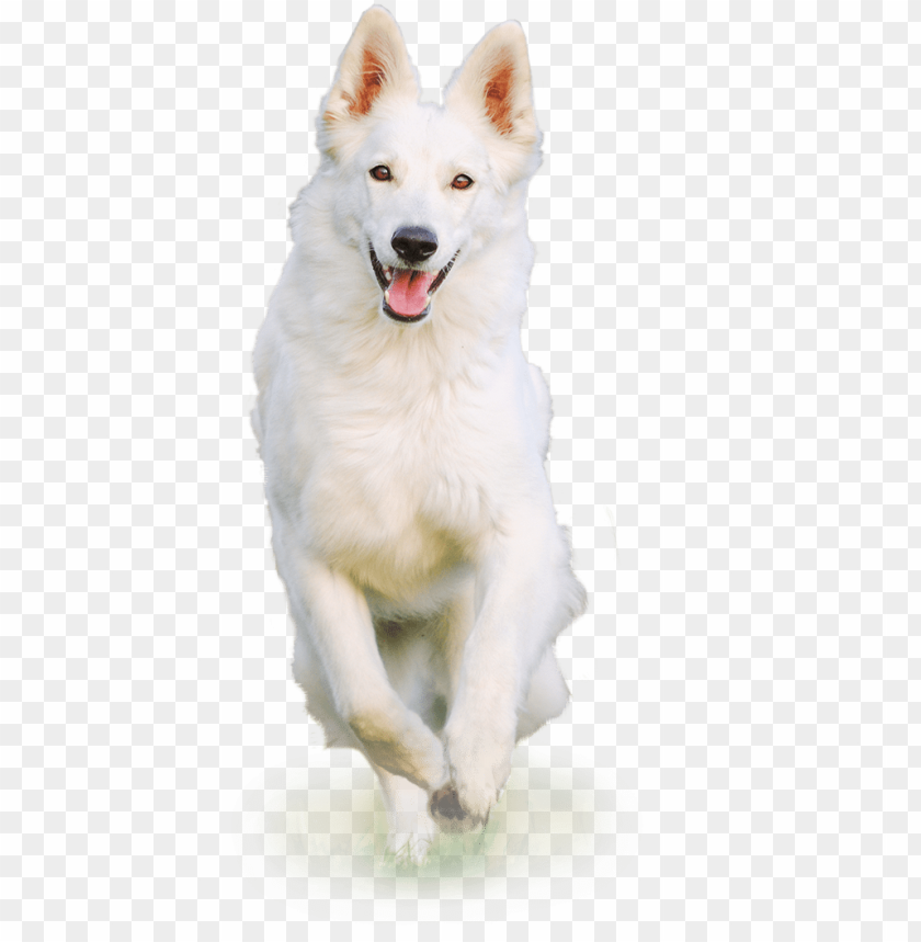 White Dog Png White Dog Png Hd Png Image With Transparent Background Toppng