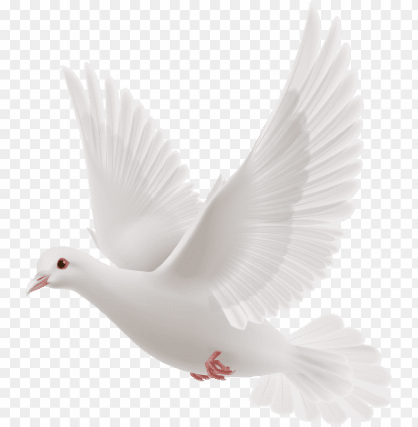 free PNG white dove flying PNG image with transparent background PNG images transparent