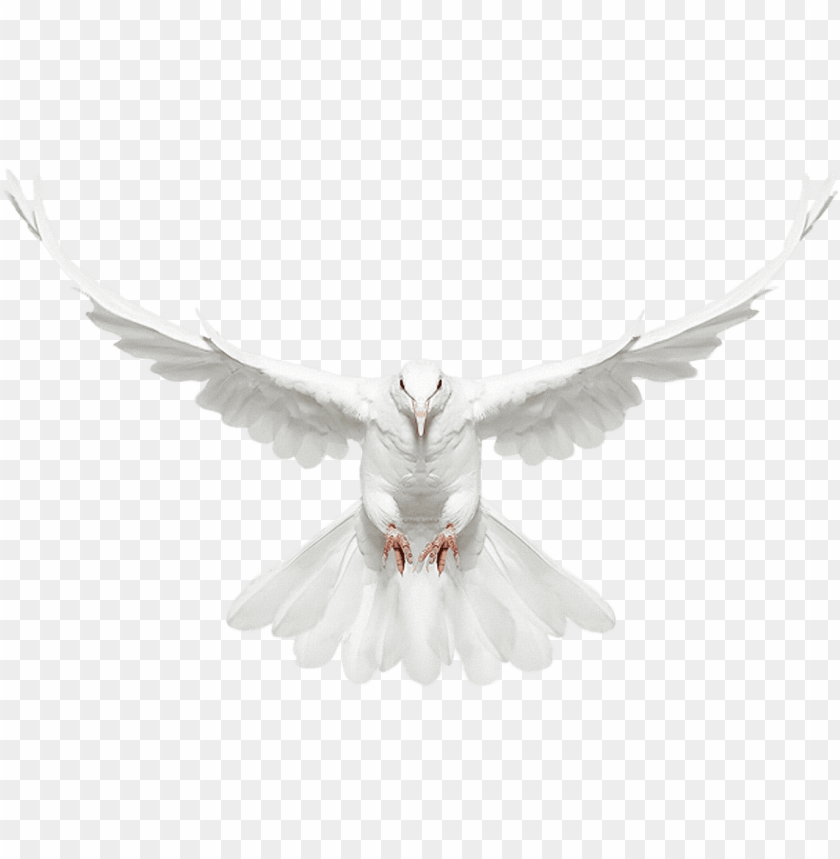 free PNG white doves with rings png - dove with wings spread PNG image with transparent background PNG images transparent