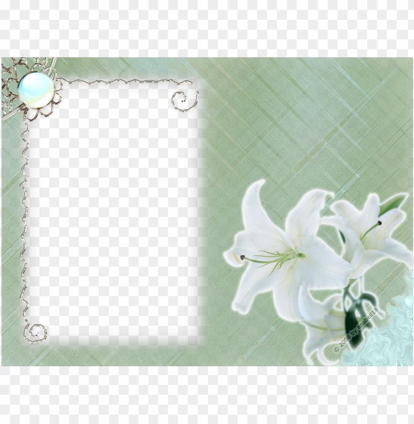 free PNG white flower frame png transparent - white flower frames PNG image with transparent background PNG images transparent