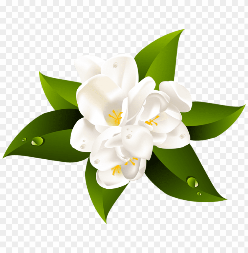 free PNG white flower transparent clip art image - clear background white flower PNG image with transparent background PNG images transparent