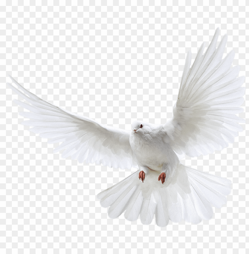 free PNG white flying pigeon png image png image - dove PNG image with transparent background PNG images transparent