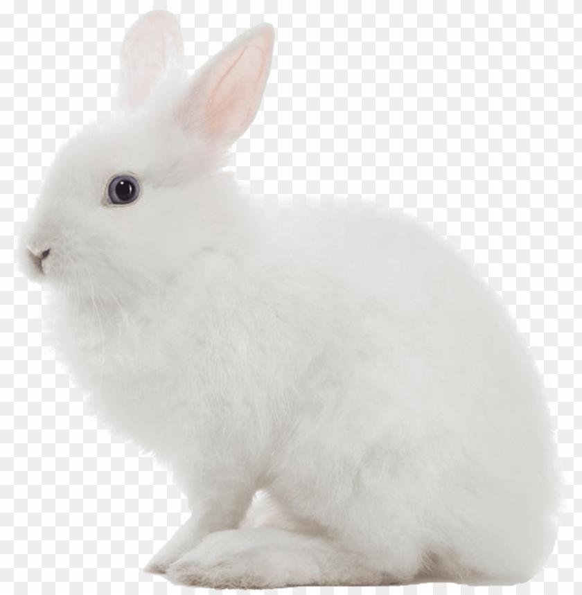 free PNG white rabbit png image - white rabbit transparent background PNG image with transparent background PNG images transparent