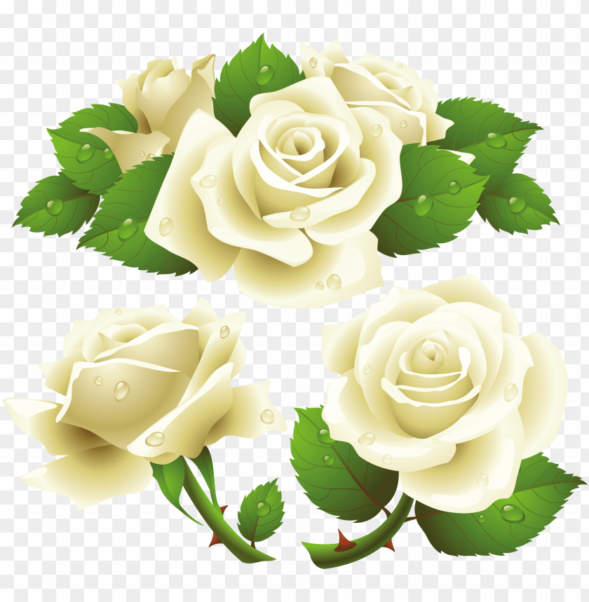 free PNG white rose png image, flower white rose png picture - white rose vector free PNG image with transparent background PNG images transparent