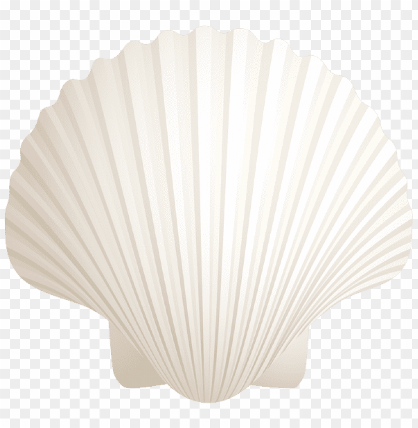 free PNG Download white seashell clipart png photo   PNG images transparent