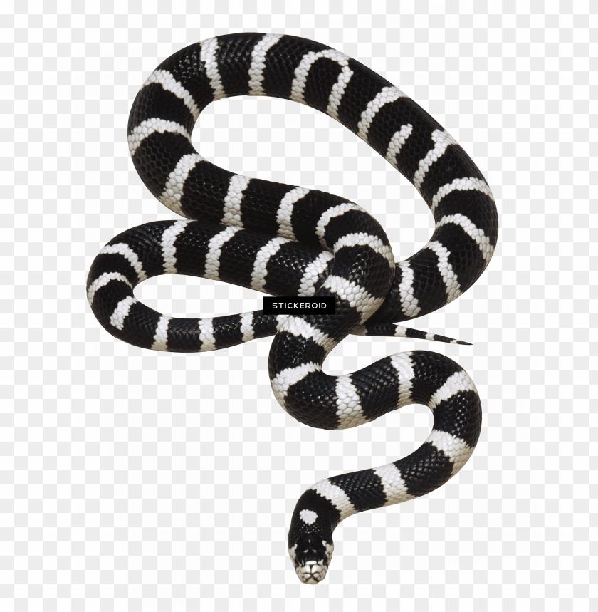 free PNG white snake - transparent background png snake PNG image with transparent background PNG images transparent