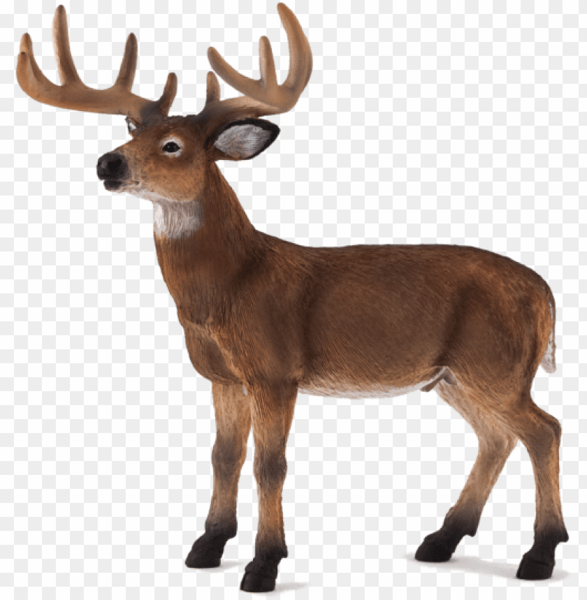 free PNG white tailed deer buck - animal planet: white tailed deer sta PNG image with transparent background PNG images transparent